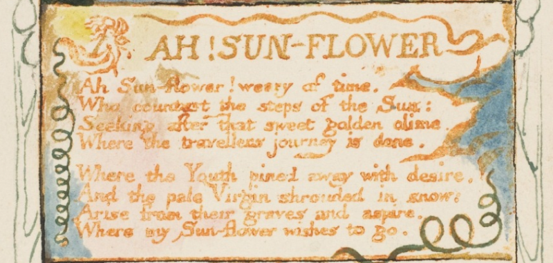 An image of Blake's writing/illustration of his poem Ah! Sunflower
